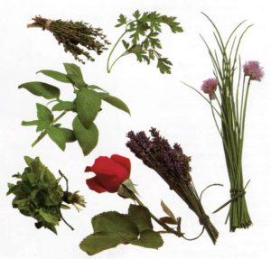 Применение пряных трав в салатах